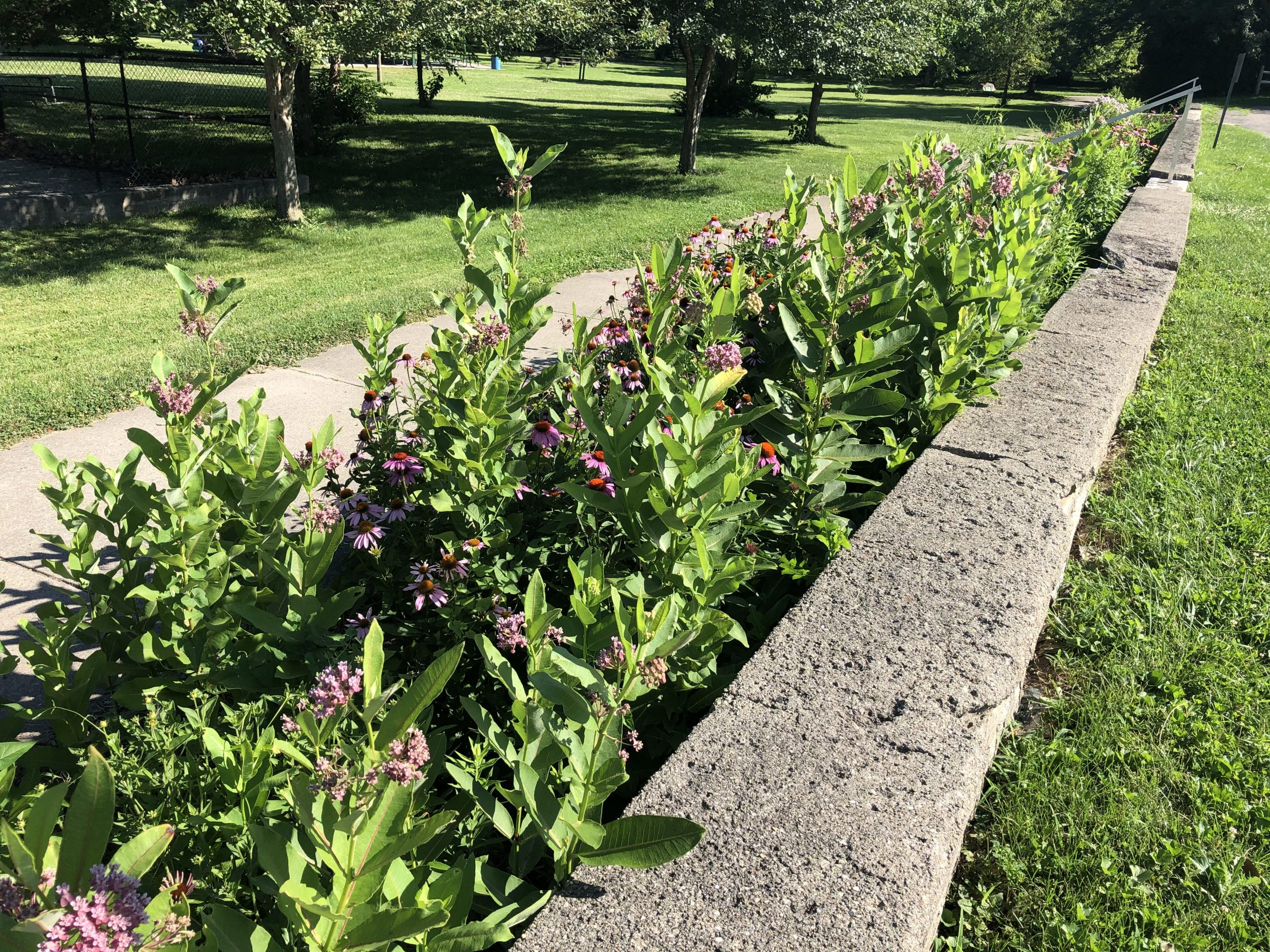 Pollinator garden, north section