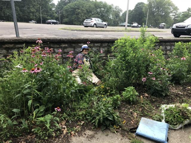 pollinator garden volunteer