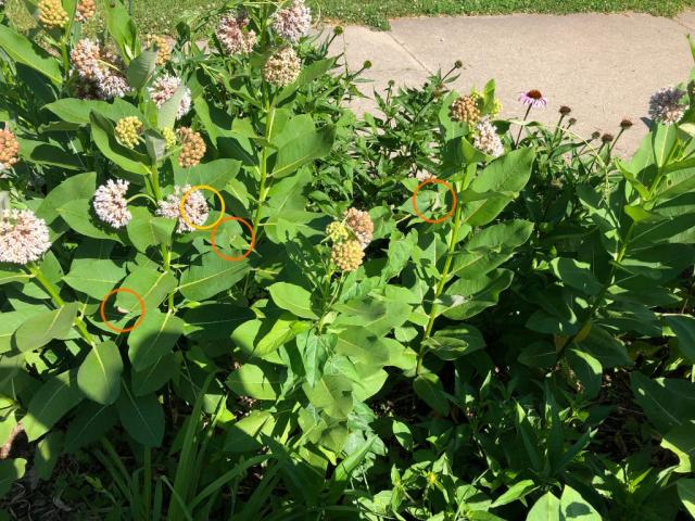 garden flowers and pollinators