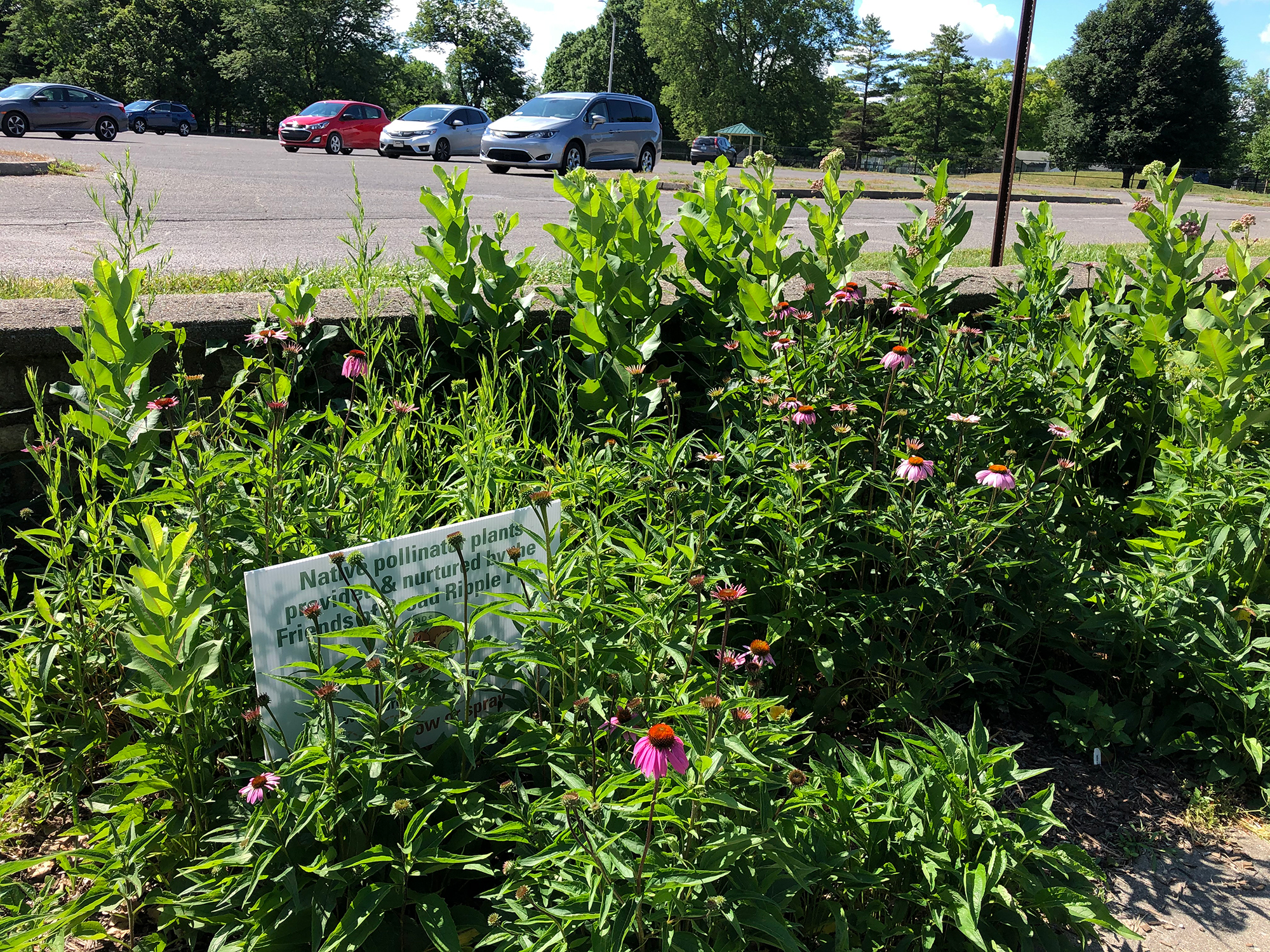 Coneflowers, milkweed & more